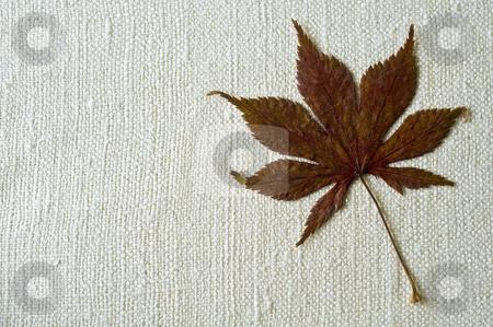 Dry Hemp leaf stock photo, Dry Hemp leaf on a natural fabric background by Noam Armonn