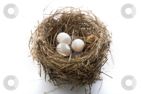 Nest and eggs stock photo, Bird's nest with three eggs isolated on white by Noam Armonn