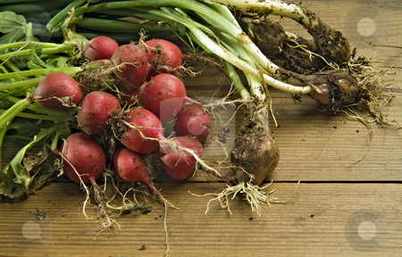 Radishes and scallion stock photo, Bunch of fresh and dirty radishes and scallion from the garden on wooden surface by Noam Armonn