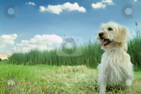 Lotto in the grass stock photo, Domestic dog enjoying nature by Noam Armonn