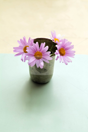 Pink daisyes stock photo, Four pink daisyes in a silver cup on an azure table by Noam Armonn