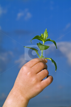 Child hands holding plant stock photo, Child hands holding plant against blue sky by Noam Armonn