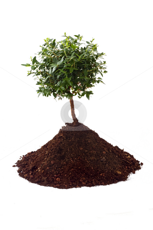 Small tree soil stock photo, Small tree on pile of soil isolated on white by Noam Armonn