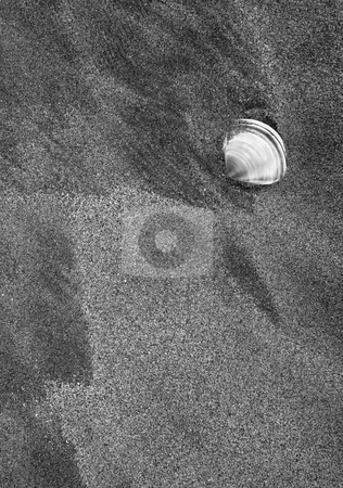 Left Behind stock photo, A shell washed up on the beach near Goolwa in South Australia by Mike Dawson