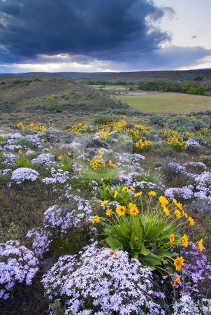 Storm over Wildflowers stock photo, Storm Clouds at sunset over wildflowers on the slopes of Snow Mountain Ranch near Cowiche by Mike Dawson