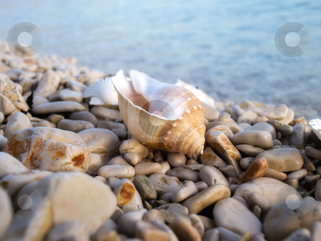 Sea snail stock photo, Conch of sea snail on a pebble beach somewhere on the Adriatic coast. by Sinisa Botas