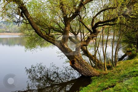 Tree on riverbank stock photo, Tree on riverbank by Jaime Pharr
