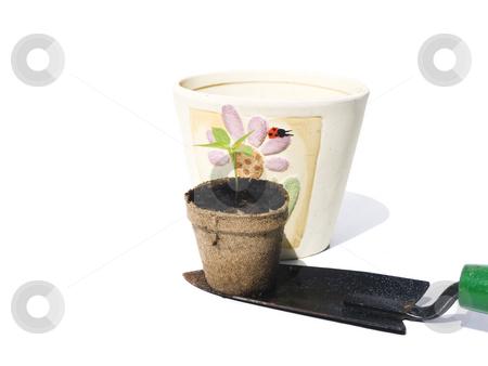 Bell Pepper Seedling on shovel for replanting stock photo, Bell pepper seedling on shovel for replanting with white background by John Teeter