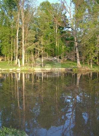 Pasture and Pond stock photo, As you marvel at the reflections of the new spring tree line that is seen in the refreshing cool pond covered by a pastel blue sky, take off your shoes and dip your feet in while soaking up the great outdoors. by Krystal McCammon