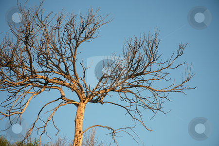 Bare tree branch background stock photo, Bare tree branch background with blue sky by Stacy Barnett