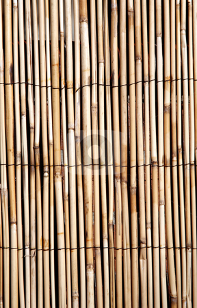 Bamboo texture vertical background stock photo, Rush or bamboo texture, digital image by Stacy Barnett