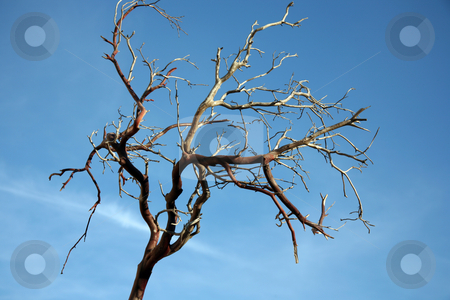Bare tree branch stock photo, Bare tree branch with almost clear sky by Stacy Barnett