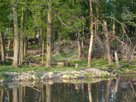 Pasture and Pond stock photo, As you marvel at the reflections of the new spring tree line that is seen in the refreshing cool pond, take off your shoes and dip your feet in while soaking up the great outdoors. by Krystal McCammon