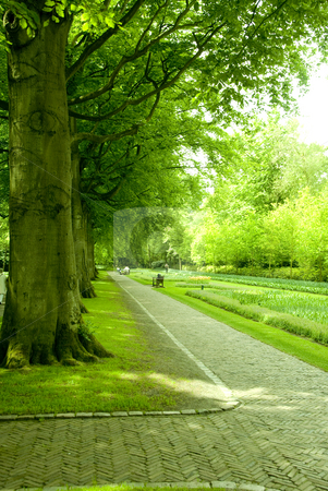 Park stock photo, Beautiful park with green trees in holland by Wolfgang Zintl