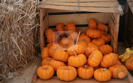Crate of pumpkins stock photo, Wooden crate of miniature pumpkins next to a bale of straw by Stacy Barnett