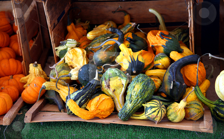 Crate of gourds stock photo, Wooden crate filled with various colorful gourds by Stacy Barnett