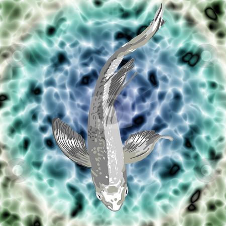 Silver Butterfly Koi stock photo, A beautiful silver butterfly koi swimming gracefully in a pond. by Karen Carter