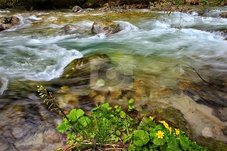 Mountain creek detail stock photo, Mountain creek detail with yellow flowers by Juraj Kovacik