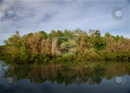 Reflection of mangrove trees in water stock photo, Reflections of apple mangroves in the water by Emma White