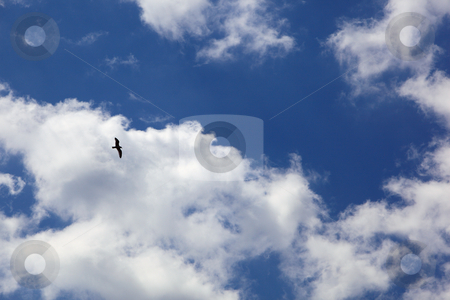 Seagull flying in the blue sky with white clouds stock photo, Seagull flying in the blue sky with white clouds in horisontal composition by Ivelin Radkov