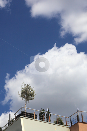 Young tree on the roof of a business building - vertical stock photo, Young tree on the roof of a business building in vertical composition by Ivelin Radkov