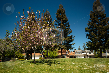 Cupertino Memorial Park stock photo, This popular 28-acre park includes acres of lawn that are ideal for family picnics, a lake, an amphitheater, lighted softball field, six lighted tennis courts, by Mariusz Jurgielewicz