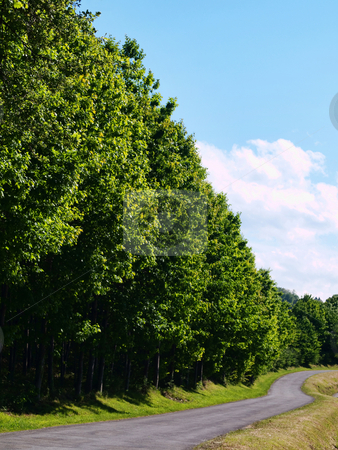 Road in the countryside stock photo, Curvey road in the countryside bordered by trees by Laurent Dambies