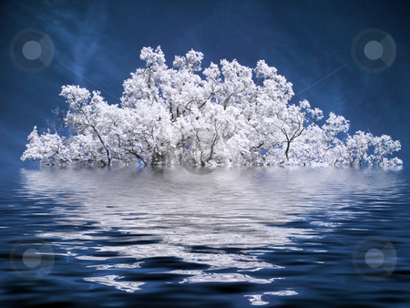 Beautiful white tree stock photo, Infrared picture of a tree under water by Laurent Dambies