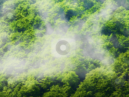 Fog in trees stock photo, Fog above a forest in the mountains by Laurent Dambies