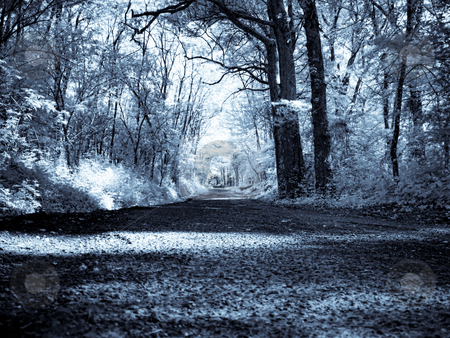Infrared forest stock photo, Infrared picture of a beautiful forest with road by Laurent Dambies