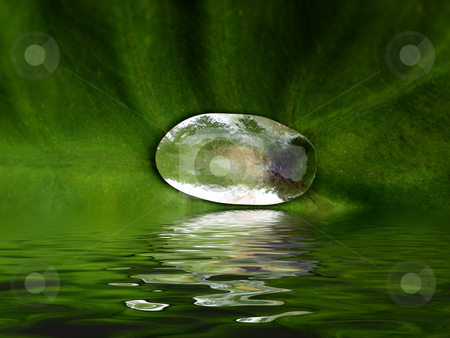 Rain drop stock photo, Rain drop on lilly leaf with water reflection by Laurent Dambies