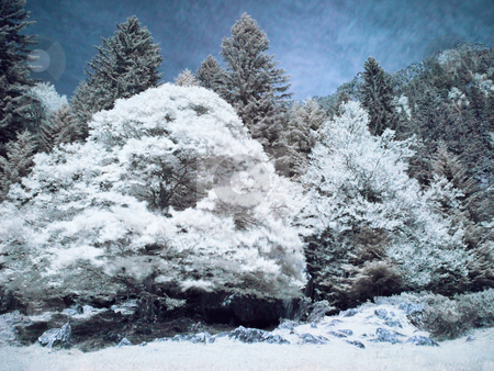 Infrared forest stock photo, Infrared picture of a beautiful forest in the mountains by Laurent Dambies