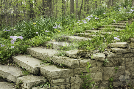 Stone stairway and wall on a shady garden path stock photo, Stone stairway and wall lined with flowering phlox on a shady garden path in a woodland by Stephen Goodwin