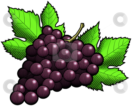 Red Grapes stock vector clipart, A vector illustration of a bunch of red grapes. by Erasmo Hernandez