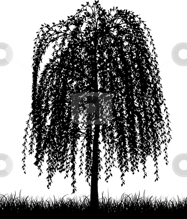 Weeping willow stock vector clipart, Weeping willow tree by Kirsty Pargeter