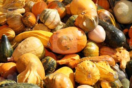 Gourds stock photo, Multiple colorful gourds ready for the holidays by Stacy Barnett
