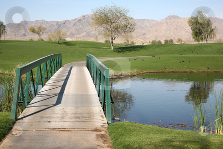 Golf course bridge 2 stock photo, Bridge on a golf course with water and birds by Stacy Barnett