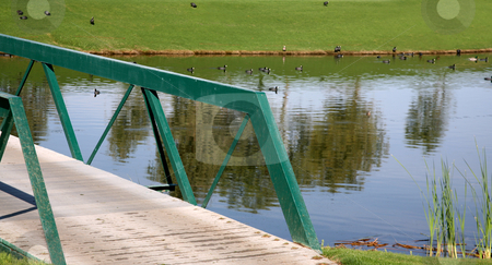 Golf course bridge stock photo, Bridge on a golf course with water and birds by Stacy Barnett
