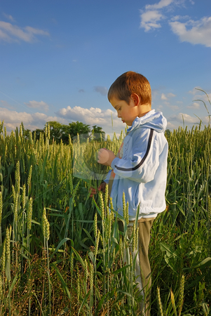 Lonely boy in wheat stock photo, Lonely boy standing in field holding wheat in hands. by Ivan Paunovic