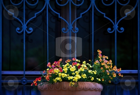 Flowers and blue bars stock photo, Flower decoration with blue bars with ornaments by Juraj Kovacik