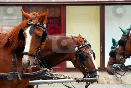 Working horses stock photo, Brown working horses street detail by Juraj Kovacik