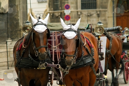 Horses and coach stock photo, Brown horsses with harness and coach on a street by Juraj Kovacik