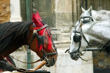 Brown and gray horses stock photo, Heads of brown and gray horses with harness by Juraj Kovacik
