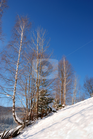 Trees in winter stock photo, General view with trees in winter by Dragos Iliescu