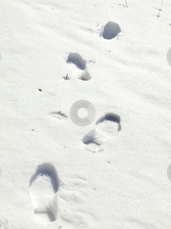 Foot print stock photo, Human foot print at the white snow by Sergej Razvodovskij