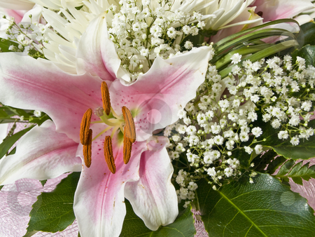 Lily flower stock photo, Flower bouquet with pink lily and white chrysanthemum by Sergej Razvodovskij