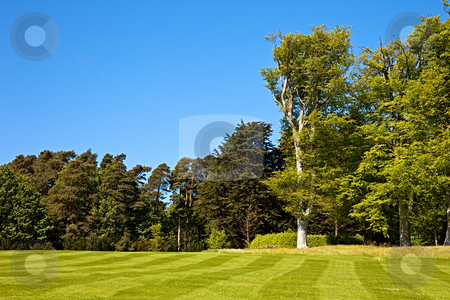 Striped lawn stock photo, A beautiful striped lawn with trees in the background by Norma Cornes