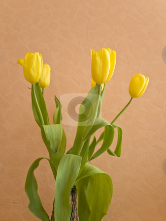 Tulips stock photo, Bouquet of the yellow spring tulips against the beige background by Sergej Razvodovskij