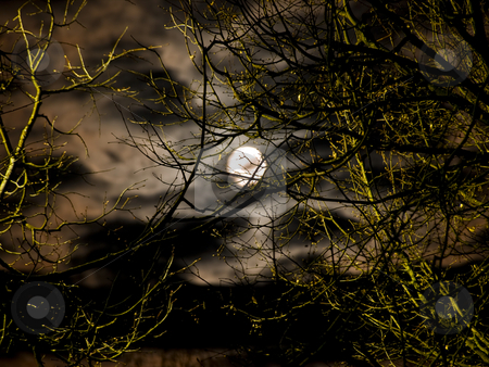 Moon stock photo, Night moon and clouds through the trees branch by Sergej Razvodovskij