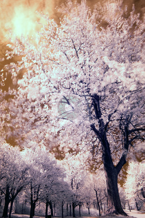 Infrared Tree stock photo, Landscape scene shot with an infrared filter by Vlad Podkhlebnik